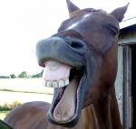 horse-laughing