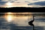 Simplicity_Walden Pond_Thoreau