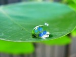 Leaf_Water_Droplet