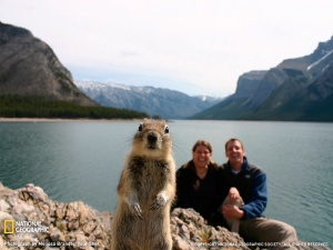 squirrel photo bomb
