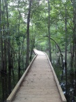 nature walkway at chattahoochee river