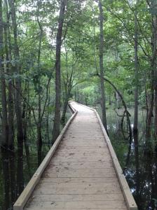 nature walkway at chattahoochee river
