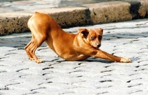 dog stretching