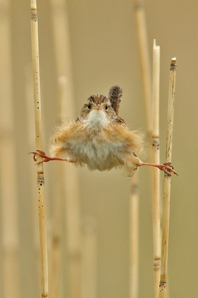 bird clinging to bamboo