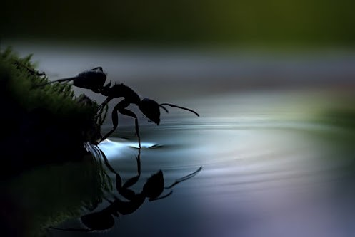 ant testing the water