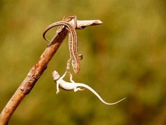 lizard helping hand