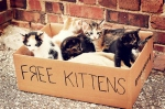 box of free kittens