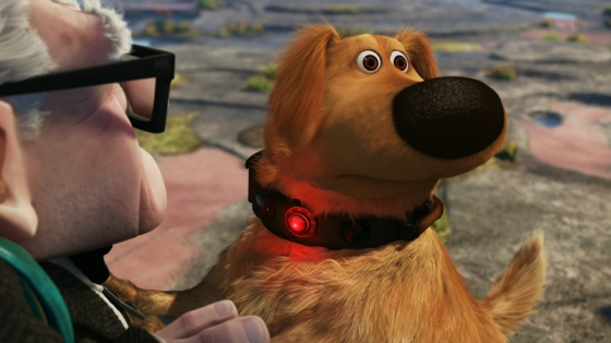 dog from up